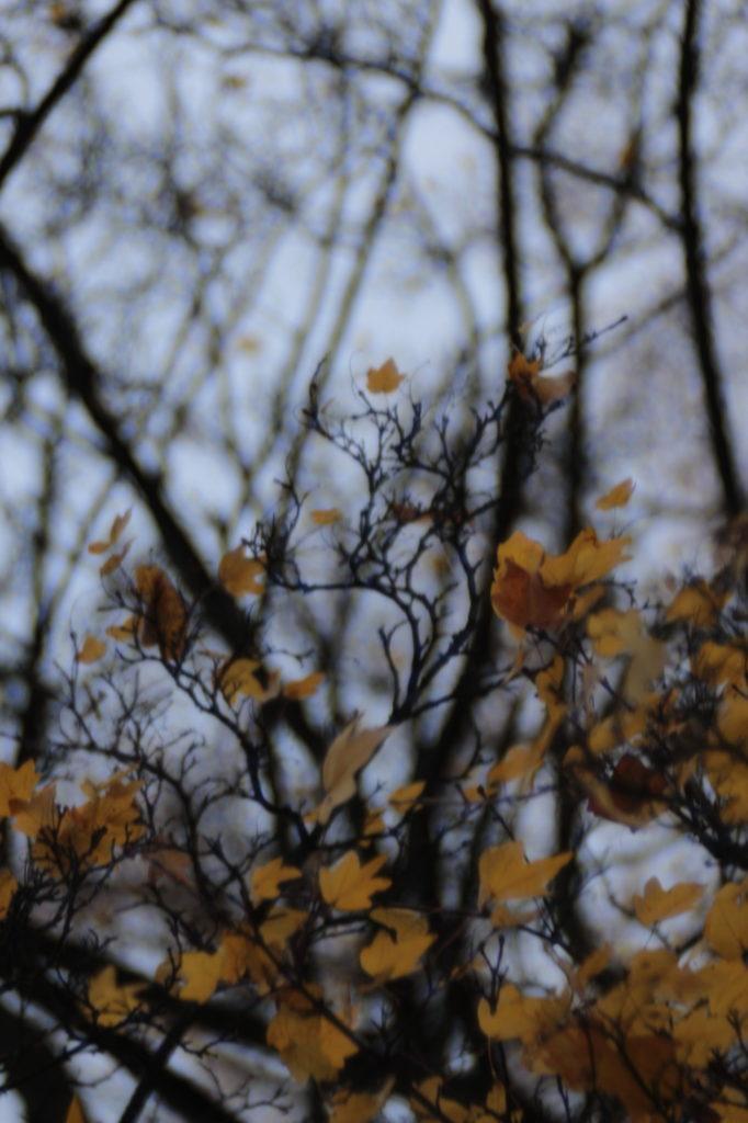 Herbstrtukturen