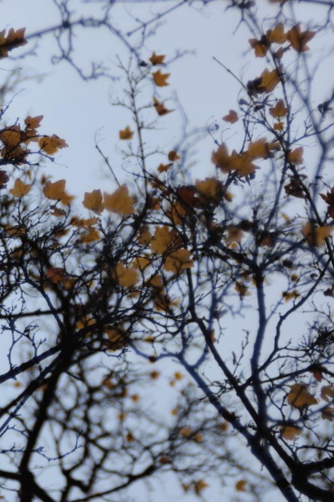 Herbststrukturen